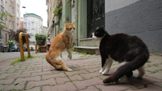 Kedi 04